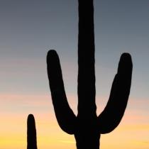 Saguaro NP, Texas, USA